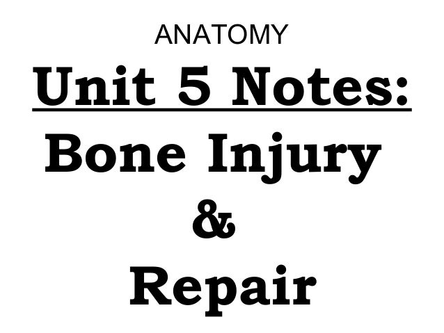 ANATOMY  Unit 5 Notes: Bone Injury & Repair