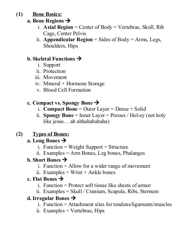 Anatomy unit 5 skeletal and muscular systems exam everything you need…
