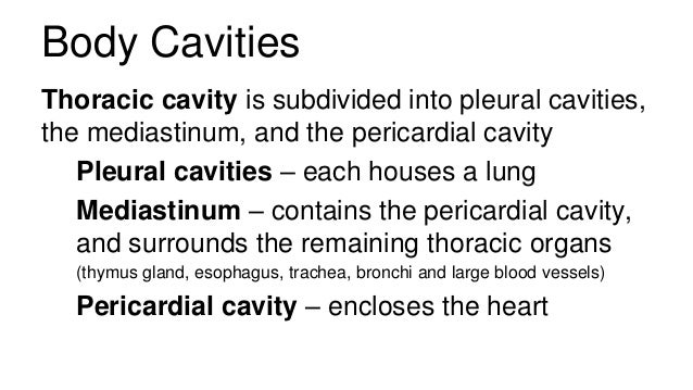 Anatomy And Physiology Introduction To The Human Body on Pericardial Cavity Anatomy Of The Pericardium En