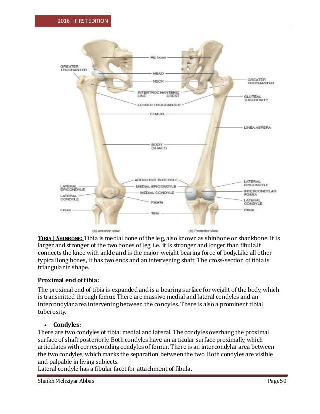 Anatomy Vol 1 For Bpmt Radiography Technology 1st Year