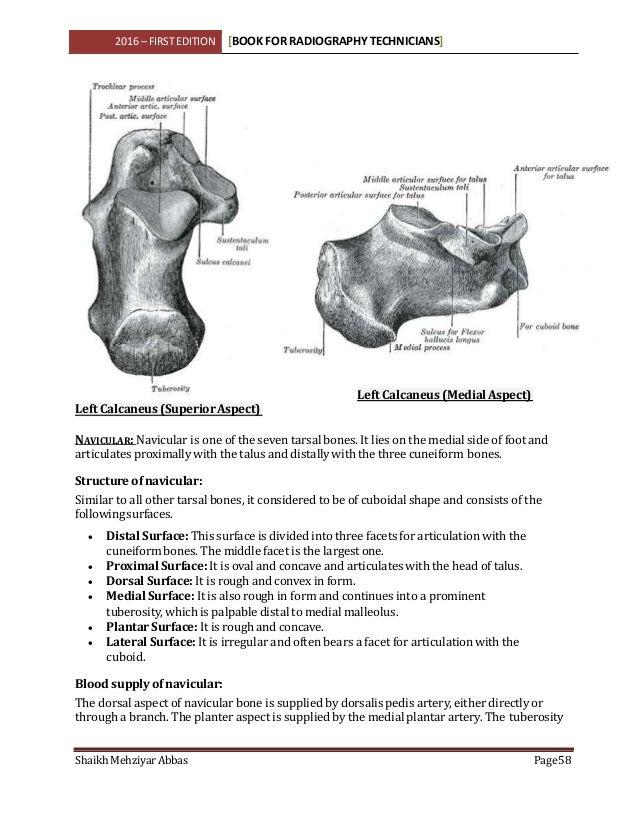 Beste Tubenligatur Anatomie Galerie - Anatomie Ideen - finotti.info