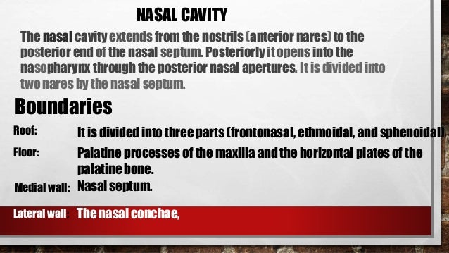 Anatomy Of The Nose And Paranasal Sinuses Made Easy