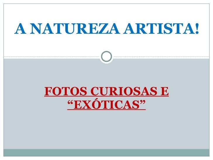 """FOTOS CURIOSAS E """"EXÓTICAS"""" A NATUREZA ARTISTA!"""