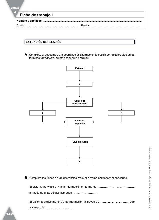 Atractivo Endocrina Diagrama Del Sistema De Hoja De Cálculo Friso ...