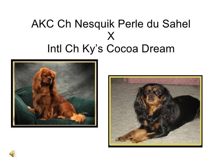 AKC Ch Nesquik Perle du Sahel X Intl Ch Ky's Cocoa Dream