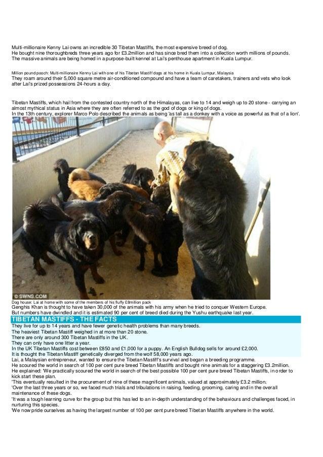 Ancient mystic mistook as modern mastiff