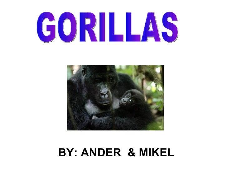 GORILLAS BY: ANDER  & MIKEL