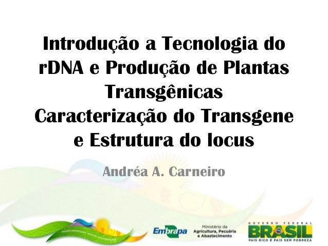 Introdução a Tecnologia dorDNA e Produção de Plantas        TransgênicasCaracterização do Transgene     e Estrutura do loc...
