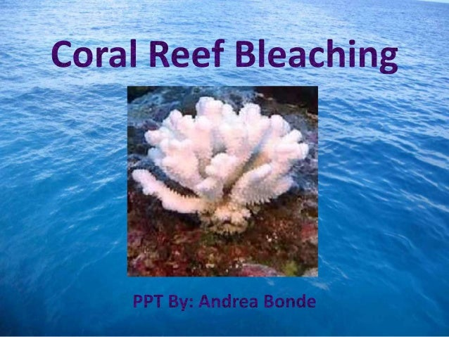 coral bleaching proposal After coral bleaching is initiated we will remove the domes and too see some highlights of our current research please click here coral reefs of the new.