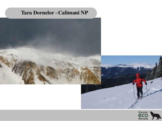 Tara Dornelor –Calimani NP