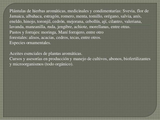 Plántulas de hierbas aromáticas, medicinales y condimentarías: Svevia, flor deJamaica, albahaca, estragón, romero, menta, ...