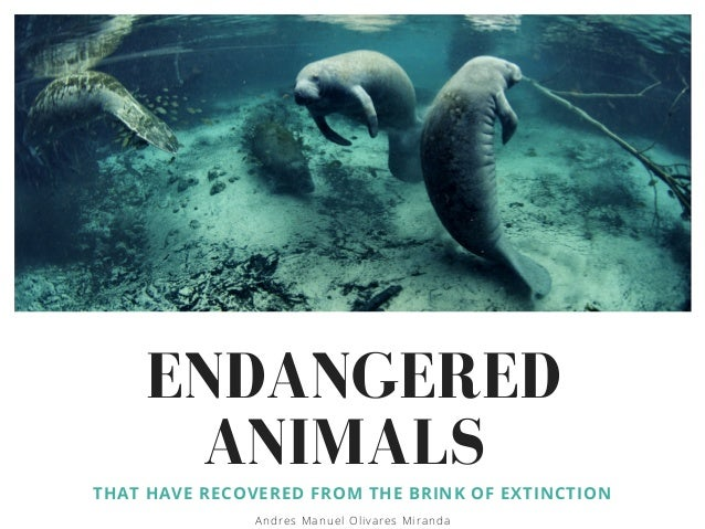 ENDANGERED ANIMALS THAT HAVE RECOVERED FROM THE BRINK OF EXTINCTION Andres Manuel Olivares Miranda
