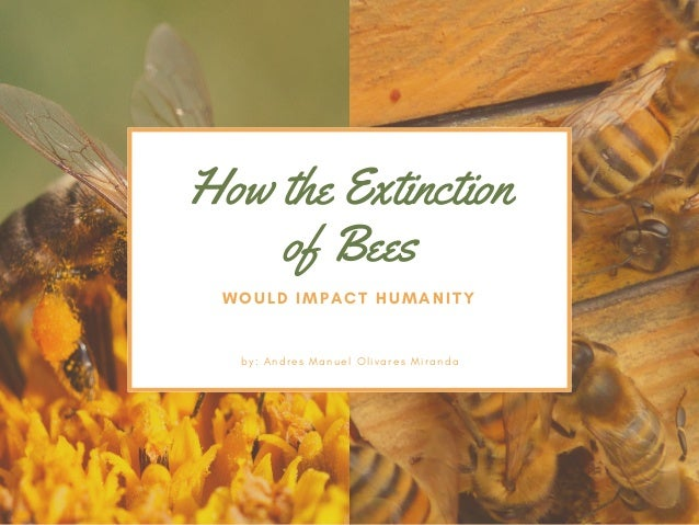 How the Extinction of Bees WOULD IMPACT HUMANITY b y :  A n d r e s M a n u e l O l i v a r e s M i r a n d a