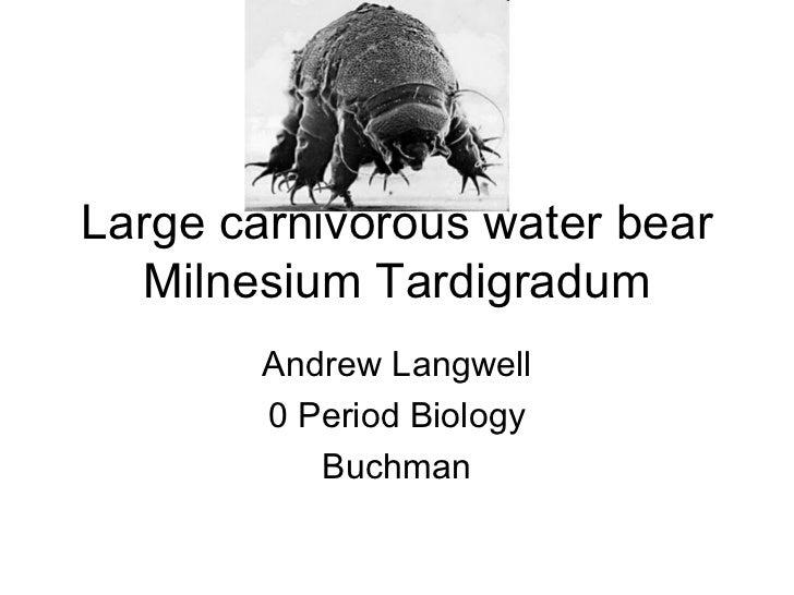 Large carnivorous water bear Milnesium Tardigradum Andrew Langwell 0 Period Biology Buchman