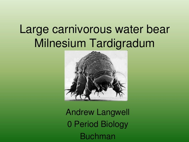 Large carnivorous water bearMilnesium Tardigradum<br />Andrew Langwell<br />0 Period Biology<br />Buchman<br />