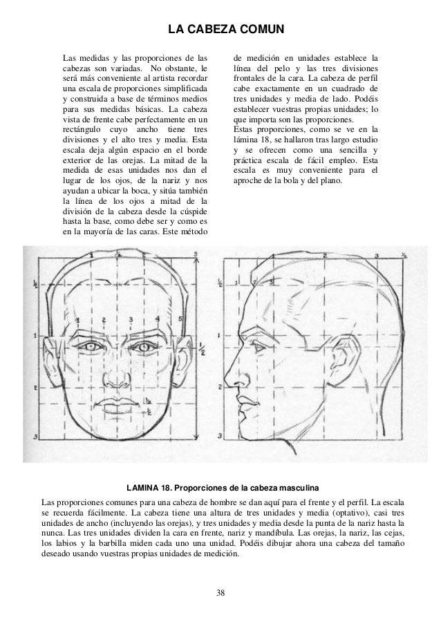 Andrew loomis dibujo de cabeza y manos espa ol for Medidas antropometricas pdf