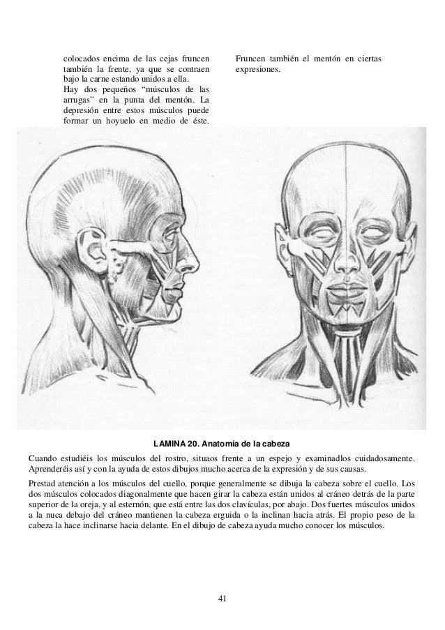 Excepcional Cara Dibujo De La Anatomía Molde - Anatomía de Las ...