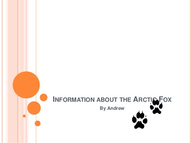 INFORMATION ABOUT THE ARCTIC FOX By Andrew