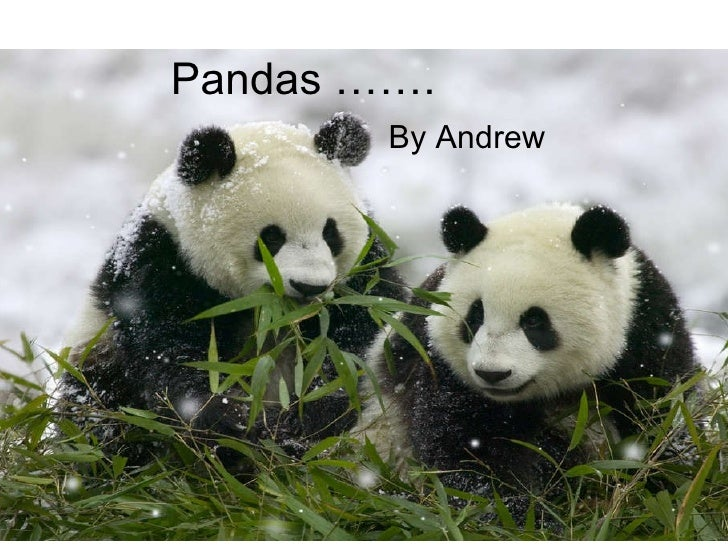 Pandas ……. By Andrew