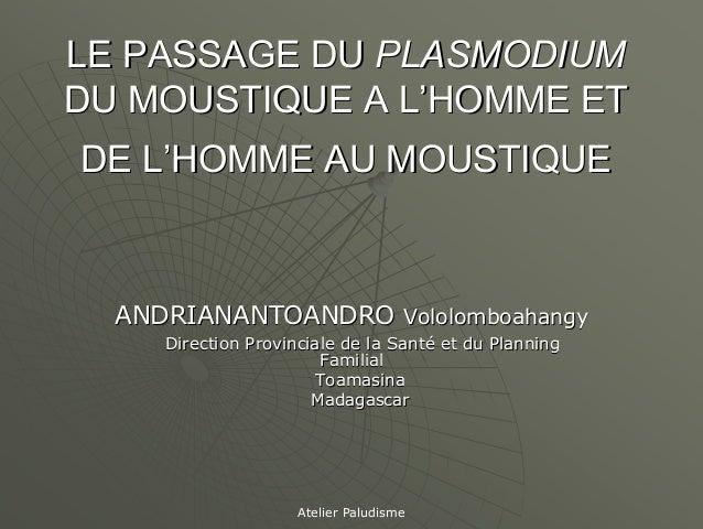LE PASSAGE DU PLASMODIUMDU MOUSTIQUE A L'HOMME ETDE L'HOMME AU MOUSTIQUE  ANDRIANANTOANDRO Vololomboahangy     Direction P...
