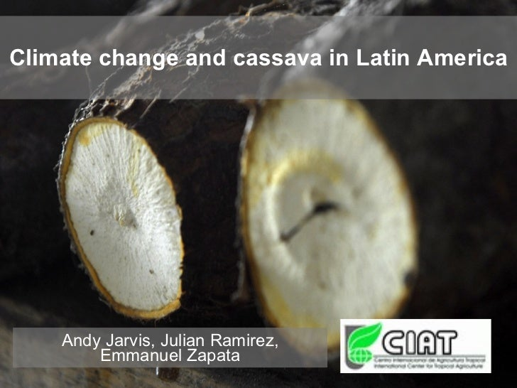 Climate change and cassava in Latin America Andy Jarvis, Julian Ramirez, Emmanuel Zapata