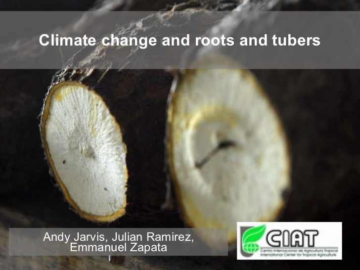 Climate change and roots and tubers Andy Jarvis, Julian Ramirez, Emmanuel Zapata
