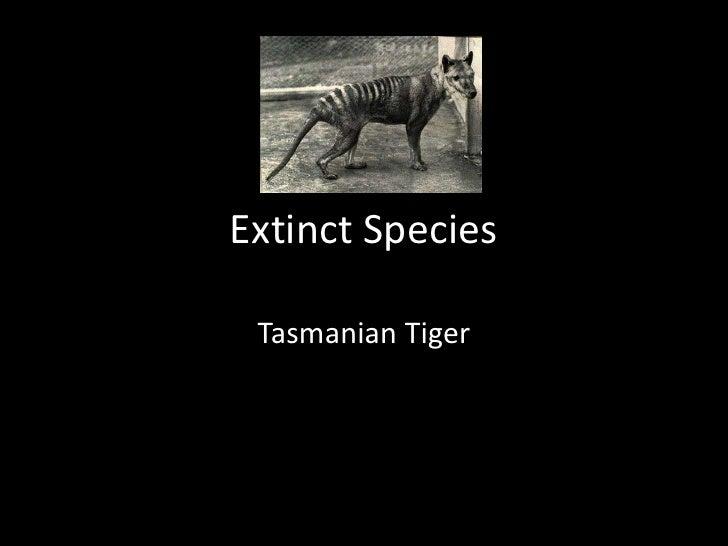 Extinct Species<br />Tasmanian Tiger<br />