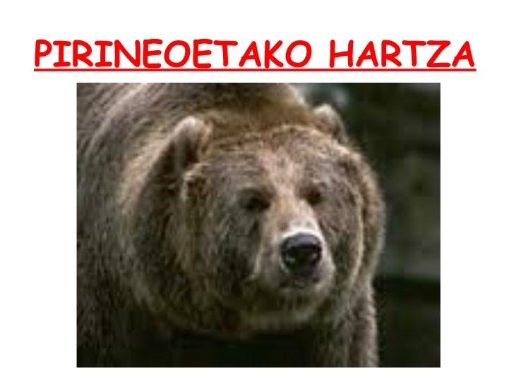 PIRINEOETAKO HARTZA