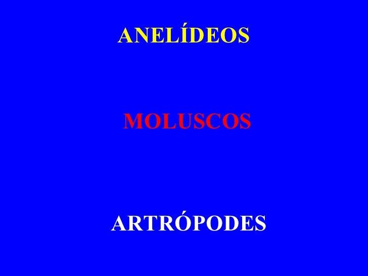ANELÍDEOS MOLUSCOS ARTRÓPODES