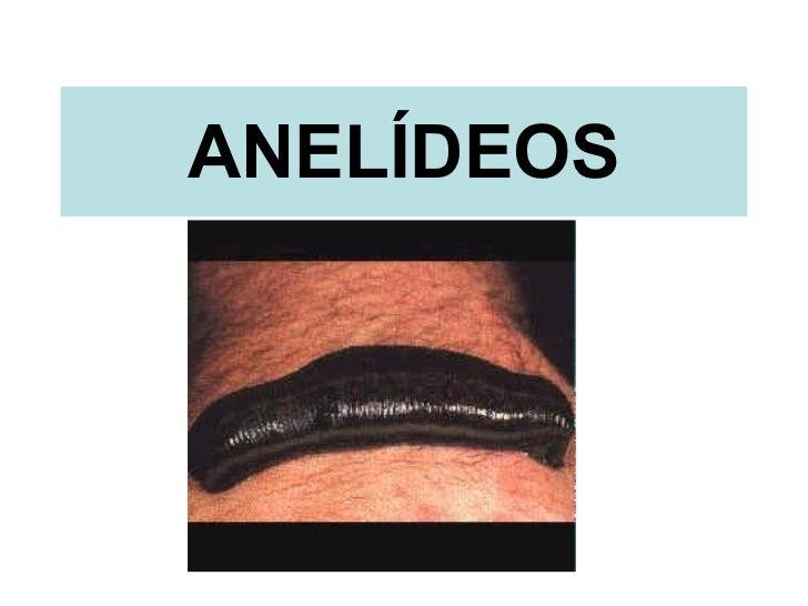 ANELÍDEOS