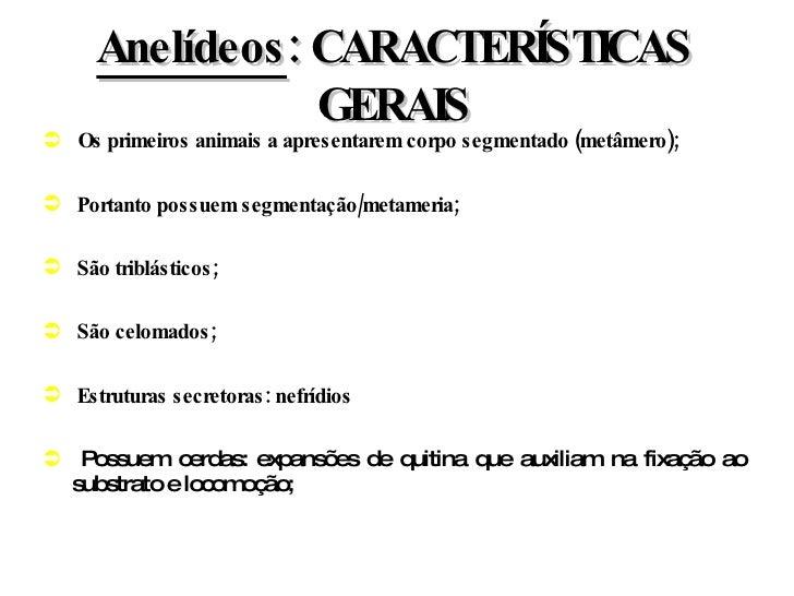 Anelídeos : CARACTERÍSTICAS GERAIS <ul><li>Os primeiros animais a apresentarem corpo segmentado (metâmero); </li></ul><ul>...