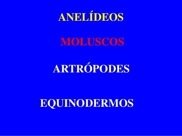 ANELÍDEOS  MOLUSCOS ARTRÓPODESEQUINODERMOS