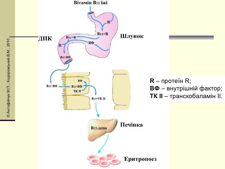 R  – протеїн R; ВФ  – внутрішній фактор; ТК ІІ  – транскобаламін ІІ.  © Антоф і йчук М.П., Ходоровський В.М., 2010
