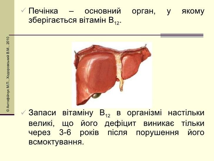 <ul><li>Печінка – основний орган, у якому зберігається вітамін В 12 . </li></ul><ul><li>Запаси вітаміну В 12  в організмі ...