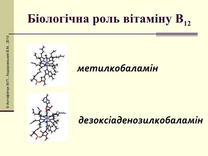 Біологічна роль вітаміну В 12 метилкобаламін дезоксіаденозилкобаламін © Антоф і йчук М.П., Ходоровський В.М., 2010