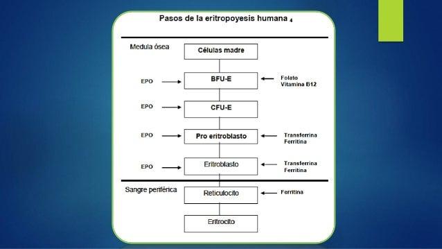  Se sugiere comenzar el uso de los AEE disponibles de acuerdo con el siguiente esquema: AGENTES ESTIMULANTES DE LA ERITRO...