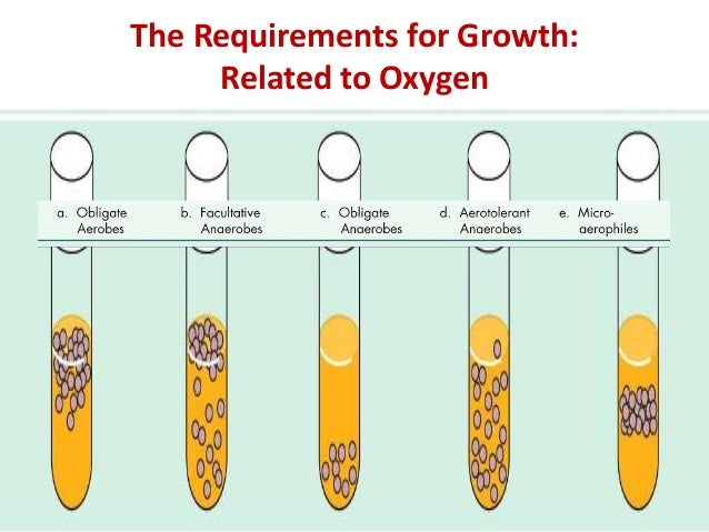 The Requirements for Growth:            Related to Oxygen• Oxygen (O2)                  Dr.T.V.Rao MD           3         ...