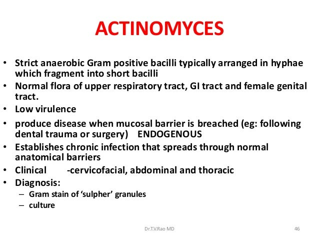 ACTINOMYCES• Strict anaerobic Gram positive bacilli typically arranged in hyphae  which fragment into short bacilli• Norma...