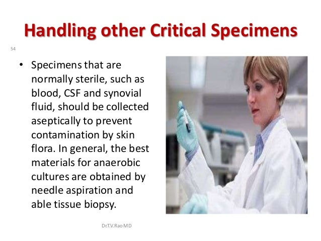 Handling other Critical Specimens54     • Specimens that are       normally sterile, such as       blood, CSF and synovial...