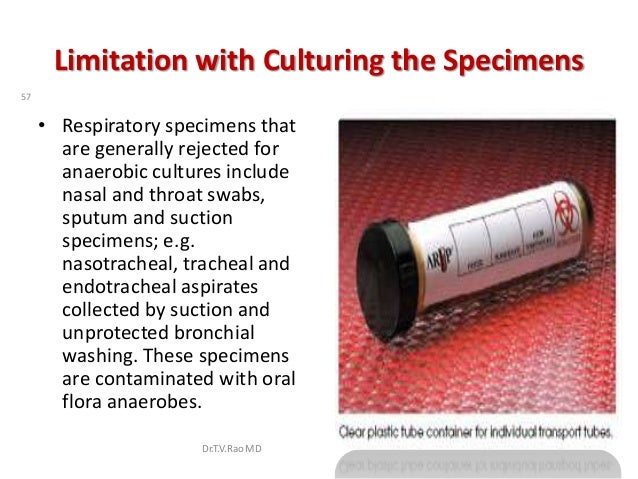 Limitation with Culturing the Specimens57     • Respiratory specimens that       are generally rejected for       anaerobi...