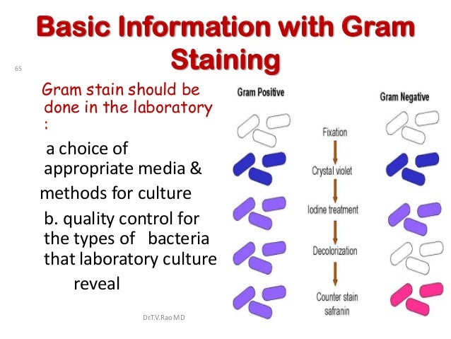 Basic Information with Gram65             Staining     Gram stain should be     done in the laboratory     :     a choice ...