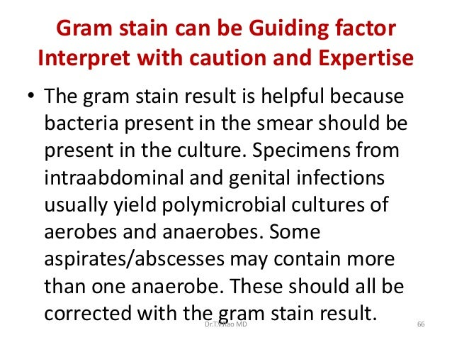 Gram stain can be Guiding factor Interpret with caution and Expertise• The gram stain result is helpful because  bacteria ...