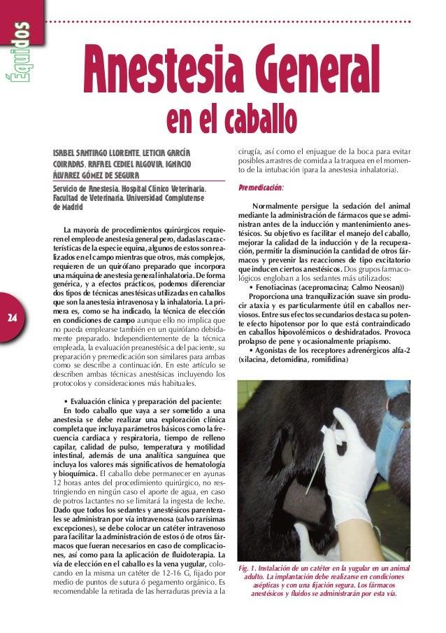 Équidos  24  Anestesia General  en el caballo  ISABEL SANTIAGO LLORENTE, LETICIA GARCÍA  COIRADAS, RAFAEL CEDIEL ALGOVIA, ...