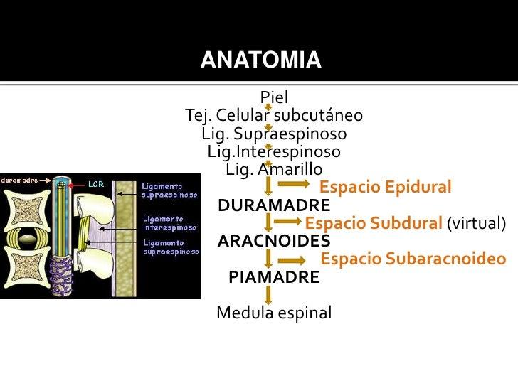 Anestesia epidural  Slide 3