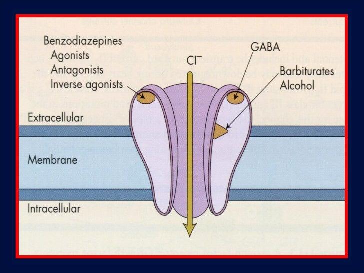 Receptor NMDA – Cetamina bloqueia os canais,prevenindo a despolarização, inibindo a resposta                 excitatória.