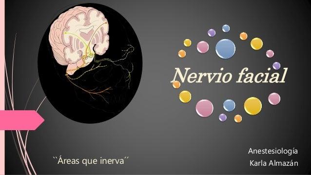 Nervio facial Anestesiología Karla Almazán``Áreas que inerva´´