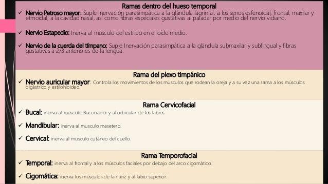 Anestesiologia - nervio facial