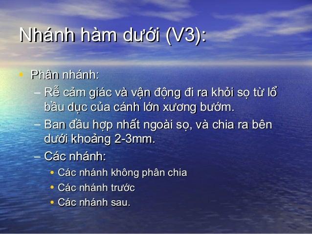 Nhánh hàm dưới (V3):Nhánh hàm dưới (V3): • Các nhánh sau:Các nhánh sau: – TK tai thái dương: chỉ cảm giácTK tai thái dương...