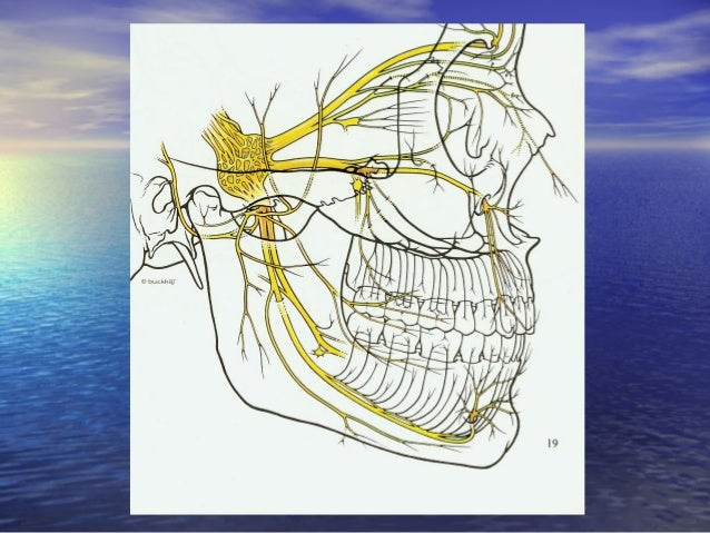 Nhánh hàm trên (V2):Nhánh hàm trên (V2): • Các nhánh:Các nhánh: – Trong sọ -Trong sọ - TK màng não giữa chi phối cảmTK màn...