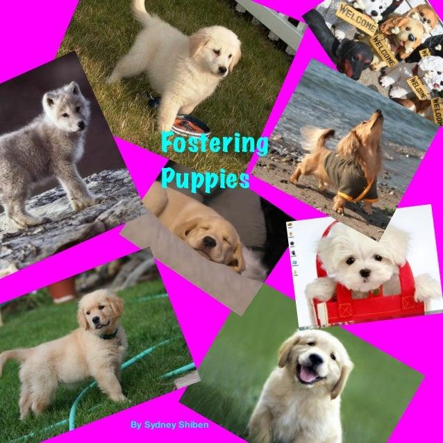 By Sydney Shiben Fostering Puppies